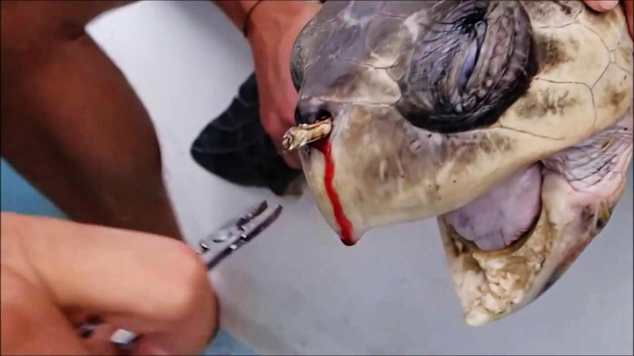 Qua một thời gian, những mảnh nhựa lớn sẽ phân nhỏ thành các mảnh vụn, cứng và có thể khiến các loài động vật biển ăn nhầm